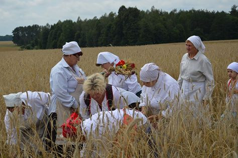 Wyjątkowe żniwa na Europejski Chleb Pokoju