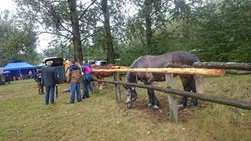 IX Regionalna Wystawa Zwierząt Hodowlanych w Drohiczynie