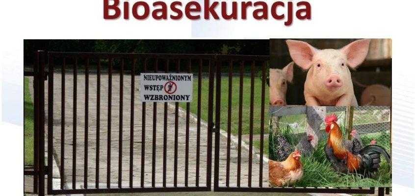 Skuteczna bioasekuracja