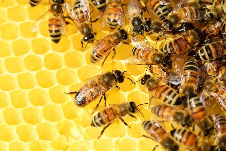"""Warsztaty pn. """"Pszczelarstwo- alternatywa dla małych gospodarstw"""""""