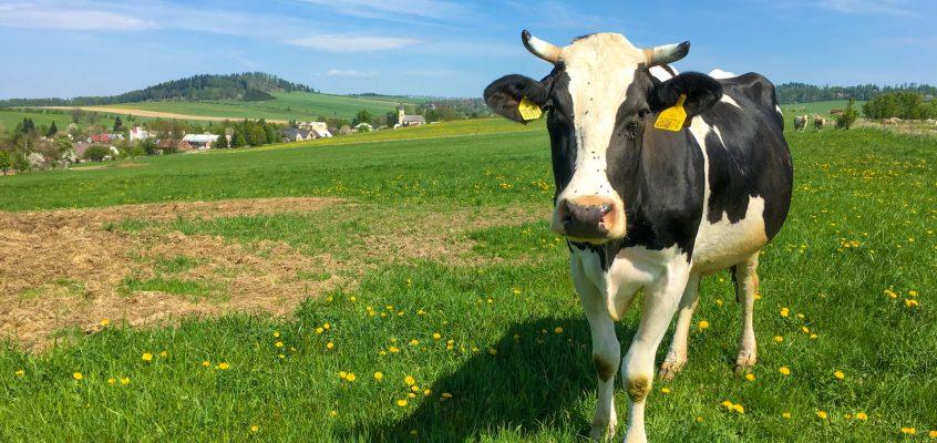 Rozszerzenie płatności dobrostanowej na inne gatunki zwierząt dopiero w nowym PROW