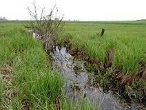 Poddziałanie 4.1.2 Inwestycje mające na celu ochronę wód przed zanieczyszczeniem azotanami pochodzącymi ze źródeł rolniczych