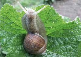 Pismo ws. pomocy dla producentów ślimaków