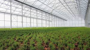 Wniosek dotyczący uprawy pod tunelami