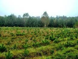 Lasy nie mogą być uznane za obszary EFA